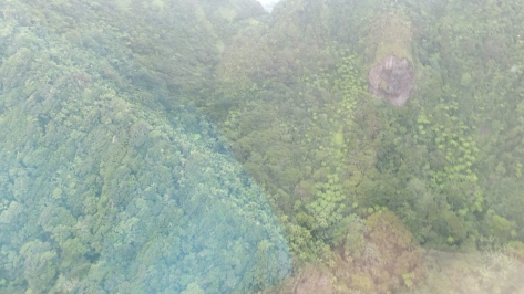 The helicopter pilot claimed there is a marijuana grow in there. Can you see it?